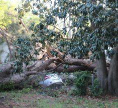 Tornado Destroys Hundreds of Homes in Monroe, La.
